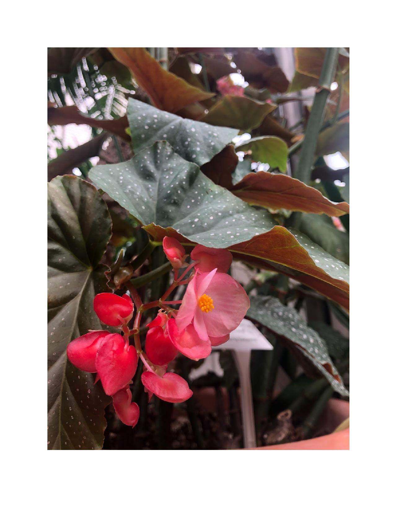 botanical close-up pink flowers