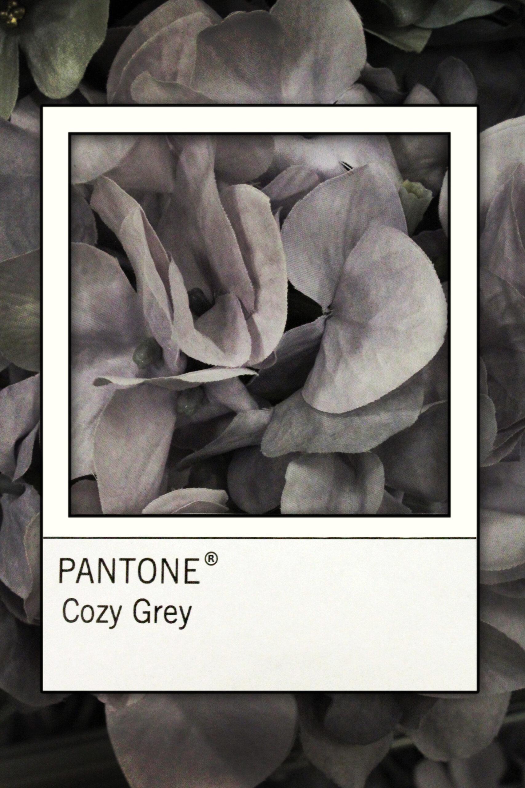 pantone coxy grey gray flower petals